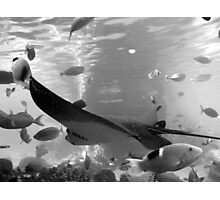 rays in black and white Photographic Print