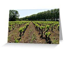 Argen Minervois vineyard Greeting Card