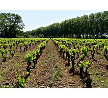 Argen Minervois vineyard Photographic Print