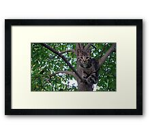 Chillaxin' in the trees Framed Print
