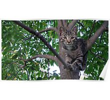 Chillaxin' in the trees Poster