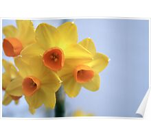 Yellow Bulbs Poster