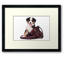 Bern Shepherd puppy and a bag Framed Print