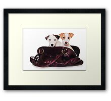 Two Jack Russell terrier puppy in a bag Framed Print