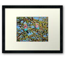 Samburu Birds Framed Print