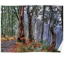 Ghosts In The Mist Revisited - The Great Alpine Road, Australia - The HDR Experience Poster