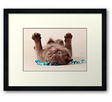 Funny brown kitten Framed Print
