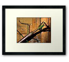 Grasshopper, Ubud, Bali Framed Print