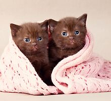 Two funny furry kitten by utekhina