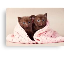 Two funny furry kitten Canvas Print