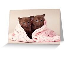 Two funny furry kitten Greeting Card