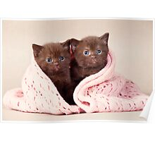 Two funny furry kitten Poster