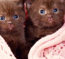 Two funny furry kitten Sticker
