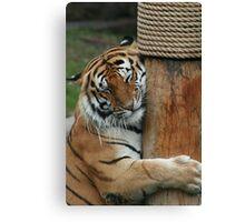 Cuddly Tiger Canvas Print
