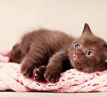 funny furry kitten by utekhina