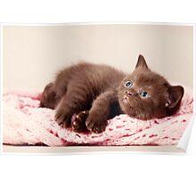 funny furry kitten Poster