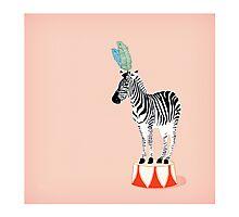 Circus Zebra Photographic Print