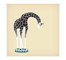 Circus Giraffe Photographic Print