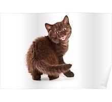 Brown fluffy kitten meows Poster