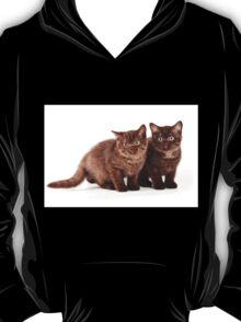 Two brown fluffy kitten T-Shirt