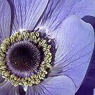 Anemone by Eve Parry