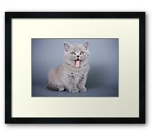 Gray fluffy kitten meows Framed Print