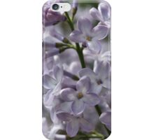Blossoming lilac. A branch of lilac in the garden. May Flowers iPhone Case/Skin