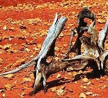 desert driftwood by beeater