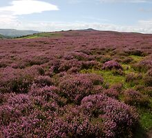 Heather Landscape by Duncan Payne