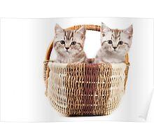 Two fluffy kitten in a basket Poster