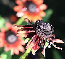Bloomin' Colours by PrairieRose