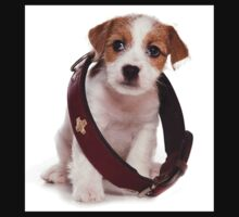 Jack Russell Terrier puppy and a large collar Kids Clothes