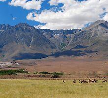 Sierra Elk by Talo Pinto