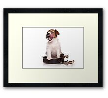 Jack Russell Terrier puppy licked Framed Print