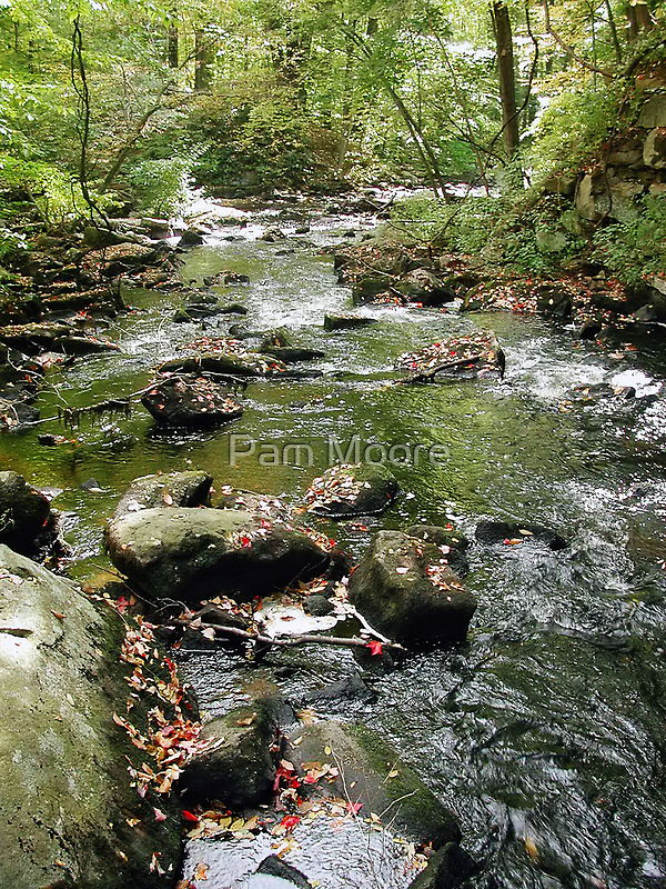 Streaming Thru The Woods by Pam Moore