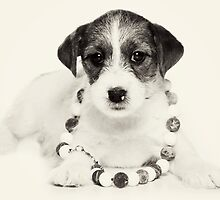 Puppy Jack Russell Terrier and beads by utekhina