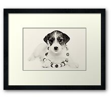 Puppy Jack Russell Terrier and beads Framed Print