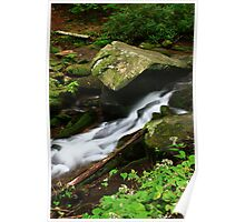 ASTERS ALONG MOUNTAIN STREAM Poster