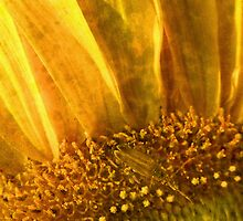 Captured Sunlight by Tibby Steedly