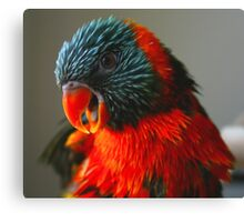 Olivia - Having A Chat To Me Canvas Print