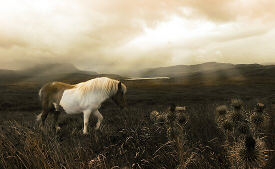 Little Wild Wanderer stalks a Whisky Sky by artyfifi