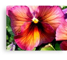 Dark Colored Pansy Canvas Print