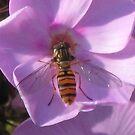 Fly on purple flower by loiteke