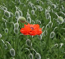 Stand out in a crowd by John Keates