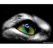 Cat Eye Photographic Print