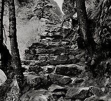 Steps of stone,Nepal Himalayas. by Neil Bussey
