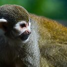 Squirrel Monkey by AjayP