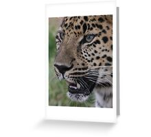 A Leopard Never Changes It's Spots Greeting Card