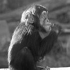Life Is Like A Monkey by Craig Goldsmith