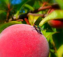 Peach and Fly by Eugenio